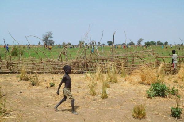 Resultaat van het project Voedselzekerheid in Z-S, groene oase in droge dorheid, 200 huishoudens verzekerd van voedsel